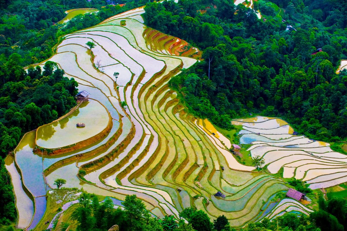 Sapa terraced fields