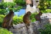 Lao Island