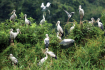 Thousands storks and herons