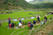 Local People working on the field