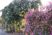 Tha Om Garden