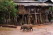 Rural Akha House