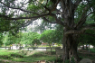 The Magic Tree Choeung Ek Killing Fields