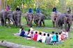 Mekong Elephant Park 2