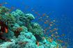 Island Coral Koh Larn