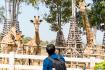 Singha Park Chiang Rai 16 L