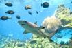 Blacktip Shark Clear