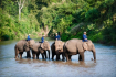 Lampang Elephant Conservation Center 2 600x400