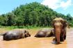Thai Elephant Conservation Centre