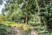 Jungle Of Rabbit Island