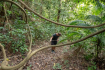 Hiking In Kep