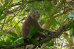 Monkey In Kep National Park