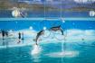 Tuan Chau Island Dolphin show