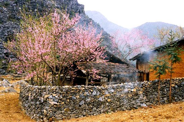 House in Dong Van