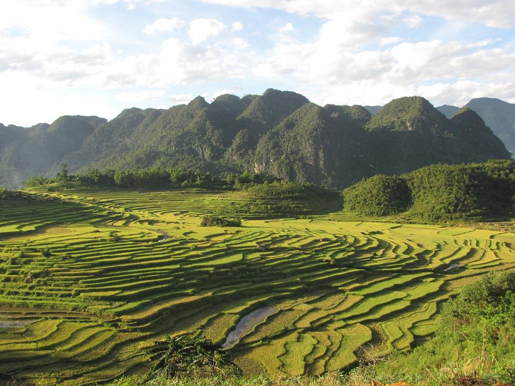 Terraced Field in Phu Luong