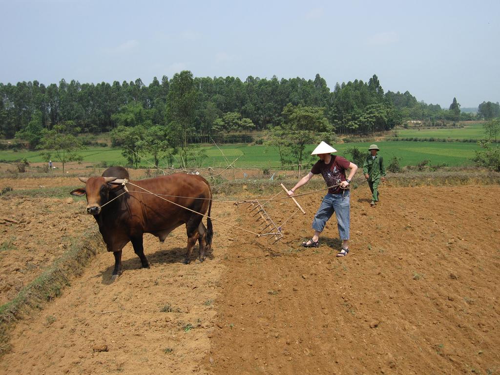 Farming in Ky Son Village