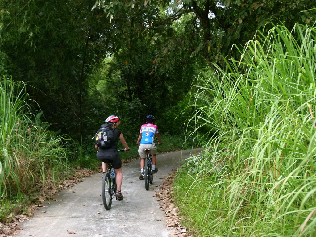 Biking on the Jungle