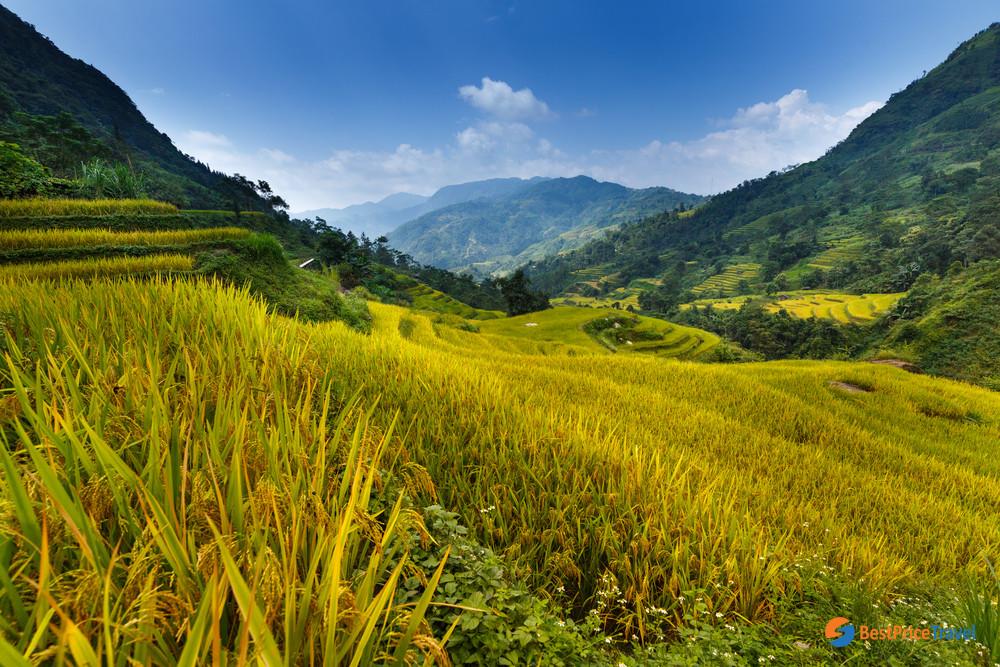 Terrace Field in Hoang Su Phi