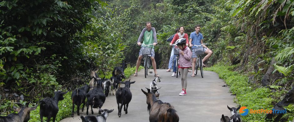 cycling tour to Viet Hai Village