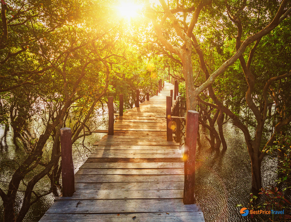 Sunset view from the wooden bridge in the jungle of mangrove trees