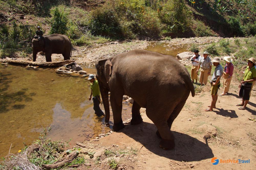 Elephant Camp in Kalaw