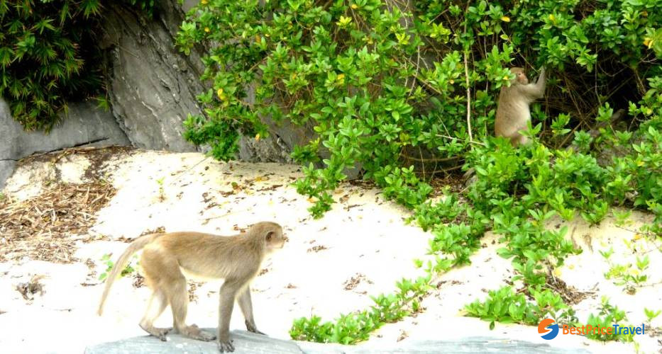 The Monkey Island