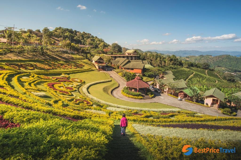 Doi Mae Salong, Chiang Rai