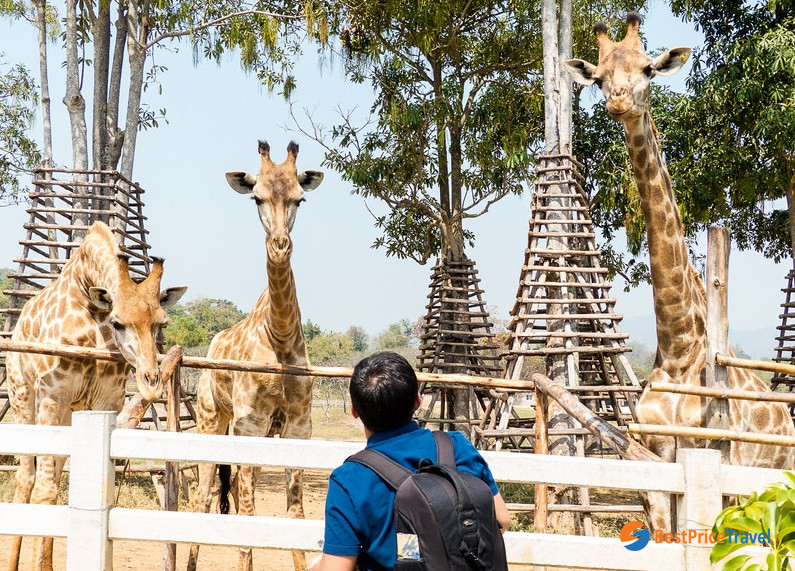 Giraffe farm in Singaha Park