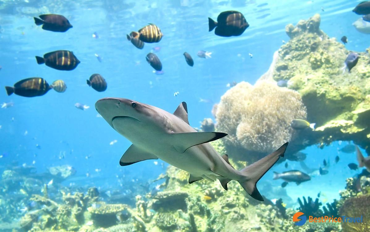 Shark-watching tour in Phi Phi Islands