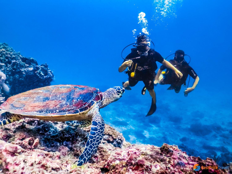 Scuba diving in Phi Phi Islands