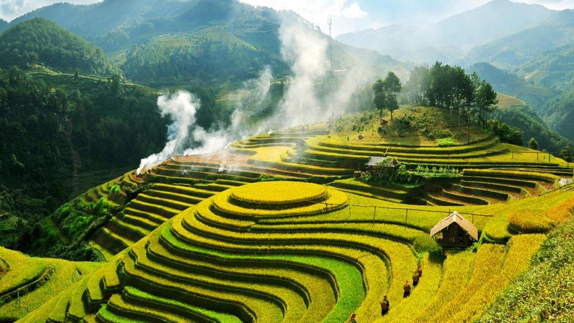Vietnam Rice Terrace Fields