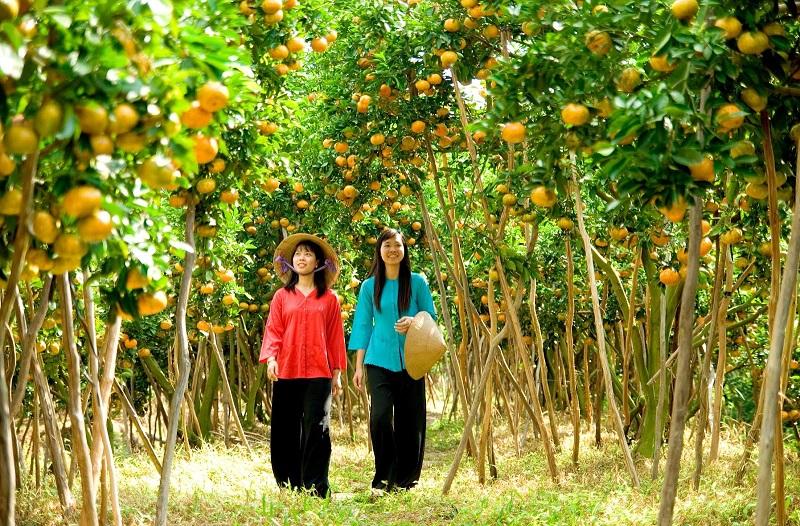 Harvest Season In Vinh Long