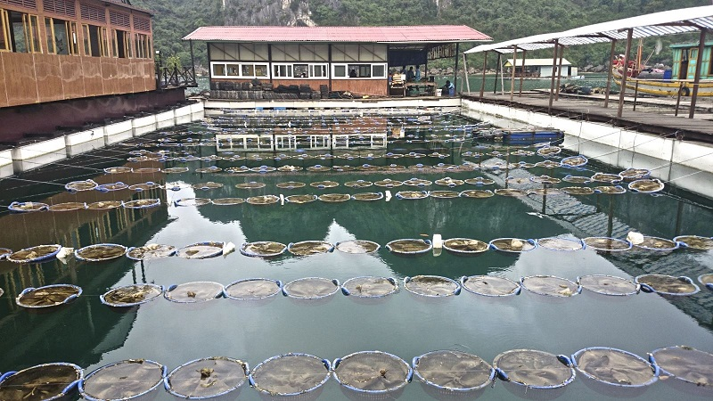 Pearl farm halong bay