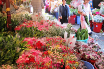 Visit Vietnam's Tet Flower Markets This January