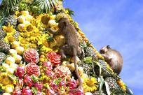 Lopburi Monkey Banquet Festival - The Most Unique Festival in Thailand