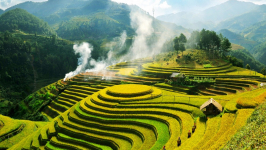 Best Time to Visit Rice Terraces in Sapa