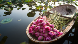 Vietnam Photography - Beautiful Shooting Corners in Lotus Blooming Season