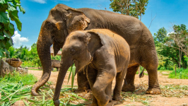 One Day at the Ethical Elephant Sanctuary in Chiang Mai