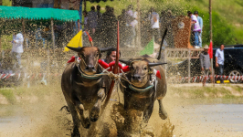 Enjoy the Excitement of Wing Kwai Festival in Thailand