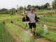 Cam Thanh Village - Be Farmer For A Day