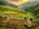 Mu Cang Chai Paragliding Festival – Flying Over Northern Vietnam Golden Terrace Fields