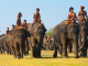 How to Celebrate the Surin Elephant Festival