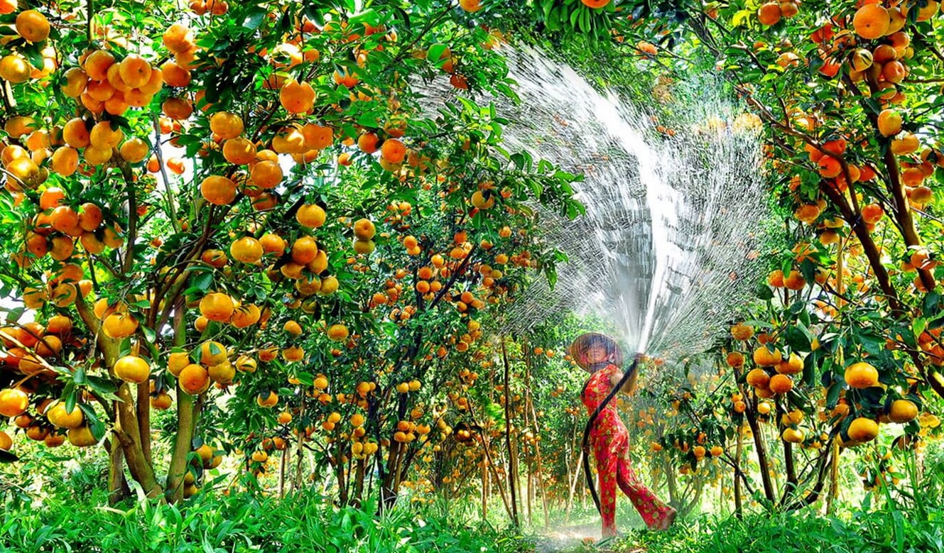 A fruit orchard in Mekong Delta