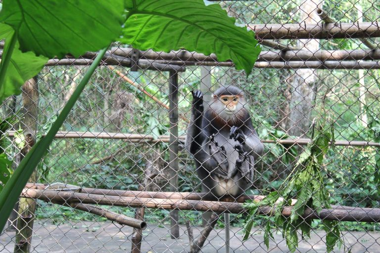 Adorable monkey at the Endangered Primate Rescue Center in Cuc Phuong National Park