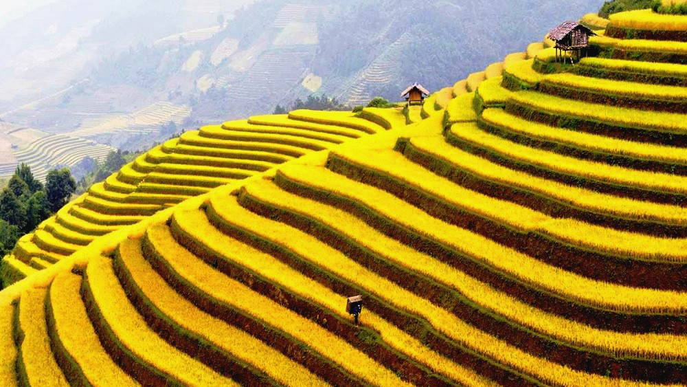 Ancestors of the local hill-tribes created the terraces some hundreds of years ago