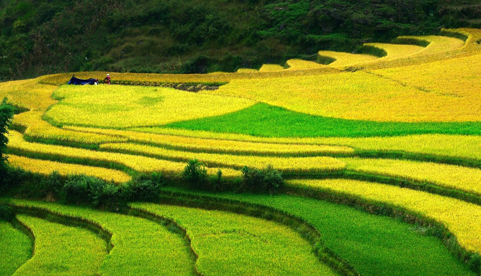 Don't leave Vietnam without visiting the rice fields and terraces