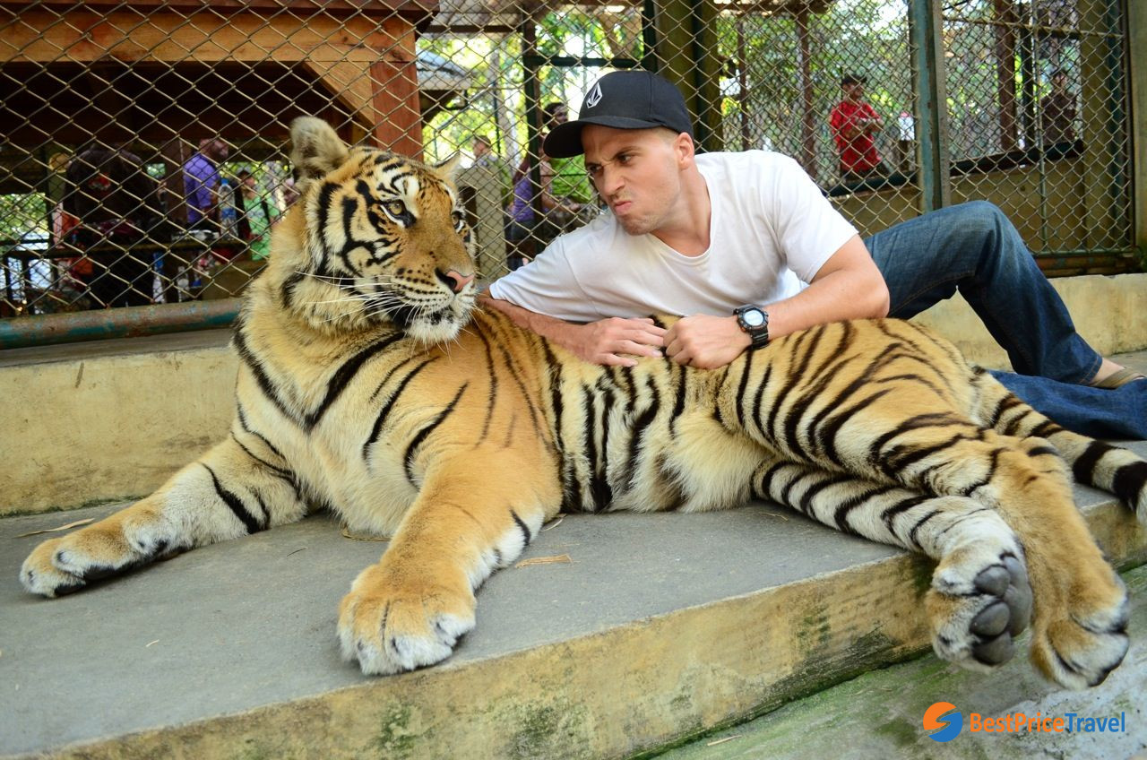 Tiger Kingdom - Chiang Mai -  5 Must-see Attractions in Indochina 2020