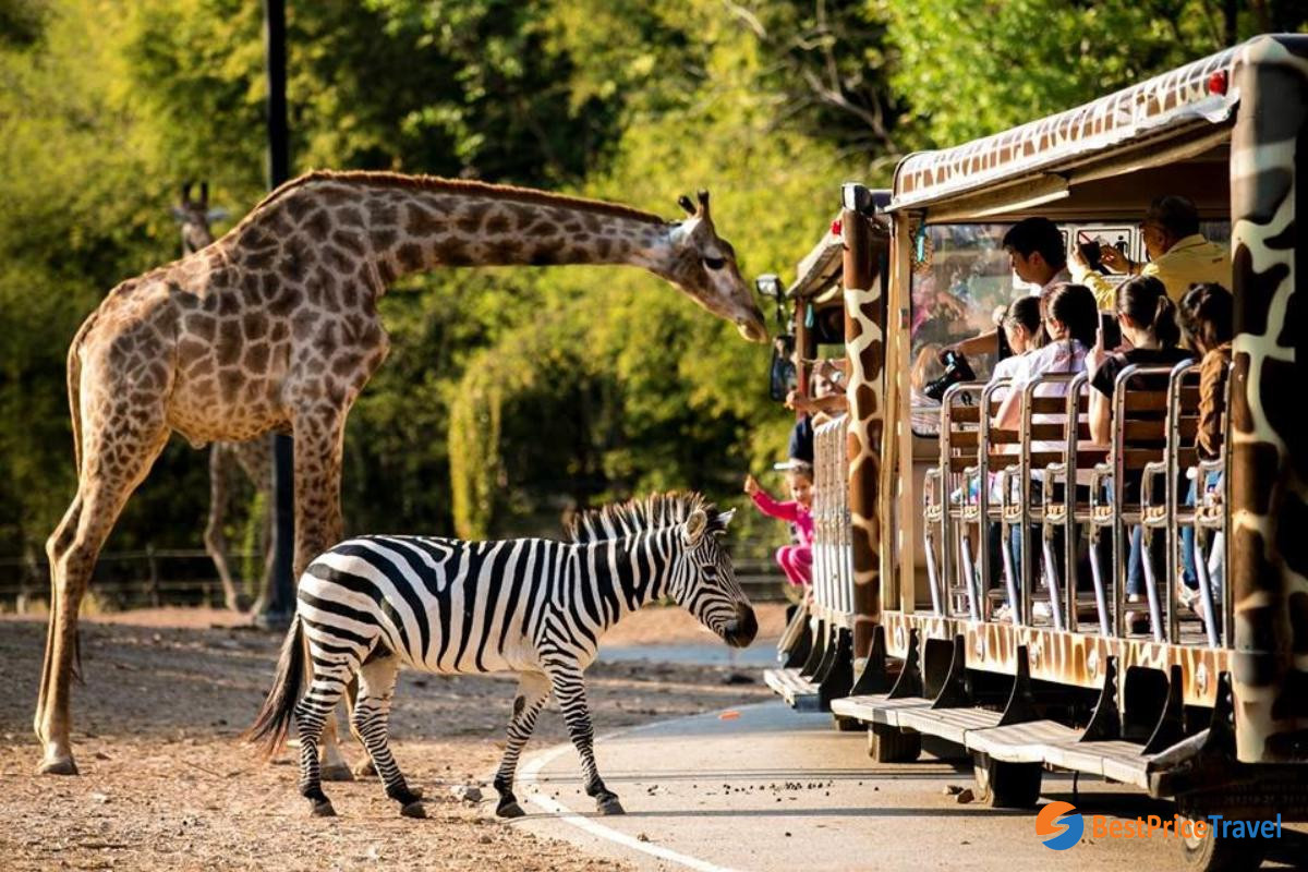 Night Safari Park - one of best things to do in Chiang Mai