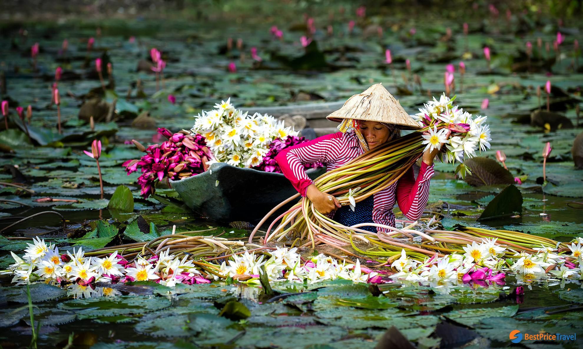 Mekong Delta in Water Lily Season