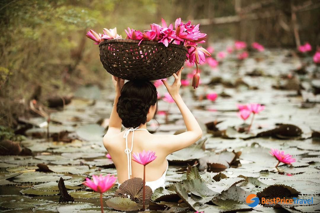 a photo with water lily